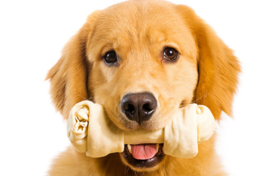 How Safe Are Rawhide Chews for My Dog?