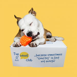 tough dog chewing on top of box